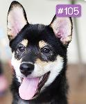 """ToShi """"Dog of the week"""" ��ͧ����蹻�Ш��ѻ����"""