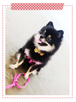 �����, ���, dog of the week, �� 3 ��