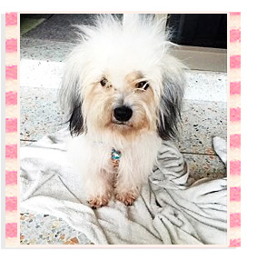 �١��, �� 3 ��, ��ǹ������Ȩ����, dog of the week 61