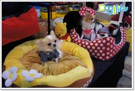 Dogilike.com :: �ҷ����ҹ Thailand International Dog Show 2012 # 2