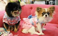 �ҷ����ҹ Thailand International Dog Show 2013 # 2