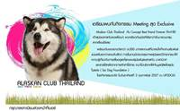 �纵��Ҿ����ҡ�� Alaskan club Thailand @Up2dogs