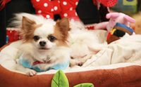 Dogilike ������Ǿҷ���� PET EXPO 2014 �͹��� 1
