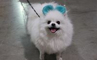 �ҷ����ҹ Thailand International Dog Show 2014 #1