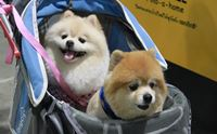�ҷ����ҹ Thailand International Dog Show 2014 #2