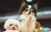 Dogilike ������Ǿҷ���� PET EXPO 2015 �͹��� 2