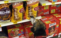 �������? 23 �.�. ���ѹ����عѢ (National Dog Biscuit Day)
