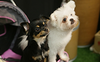 Dogilike ������Ǿҷ���� PET EXPO 2016 �͹��� 1