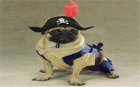 Pirate Dog ����͹�ͧ���������Ѵ!