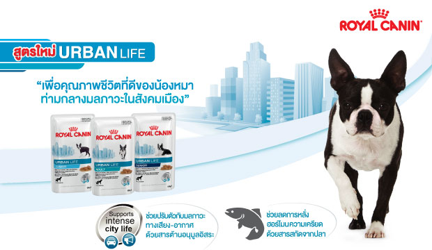 Royal Canin �ٵ�����! Urban Life