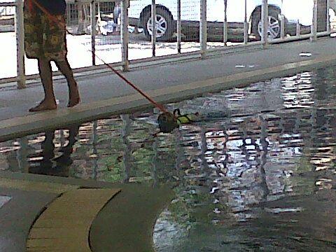 บ่มโดดลงสระน้ำ @ Pet Paradise Park