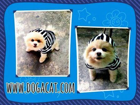 น้องจิ๊ฟฟี่ เสื้อสุนัข ลายขวาง ขาวดำ http://www.dogacat.com
