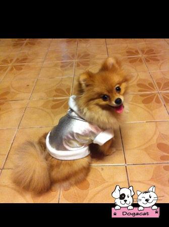 เสื้อสุนัข กันฝน สุดฮิป สีเงิน by น้องถ้วยแก้ว