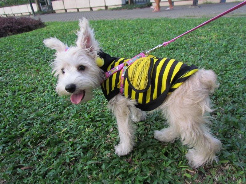 แปลงร่างเป็นผึ้งน้อย