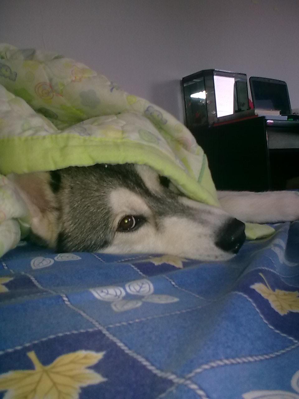 นอนห่มผ้าด้วย  ท่าทางจะหนาว
