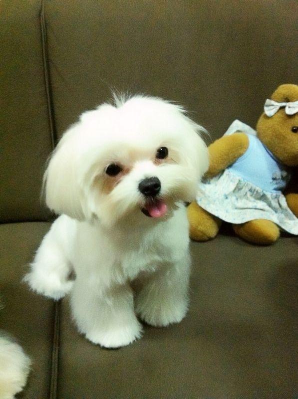 หนูชื่อฟองดอง