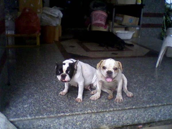 กัสจัง(ซ้าย) กับ ปีโป้(ขวา)