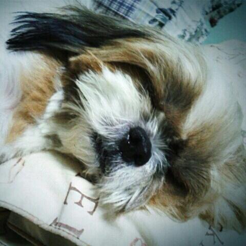 นอนหลับฝันหวาน
