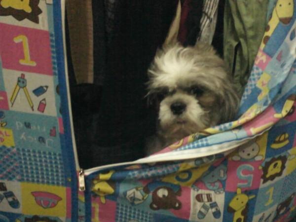 หมาซ่อนตู้