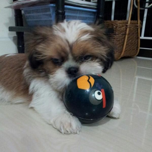 เล่นบอล^^