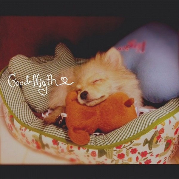 Good night kub ZZzz