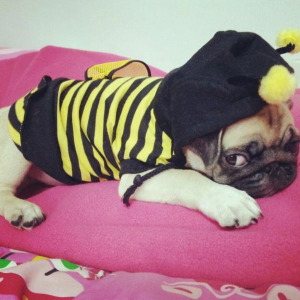 ผึ้งน้อยๆ