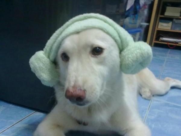 พี่ตุ๋น...หมาเกาหลี