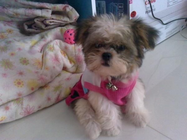 แม่จ๋า ซื้อ ผ้าใหม่ให้น้อง สีชมพู๊ ชมพู >> ดูไปดูมา เหมือนตุ๊กตาล้มลุกเลย ว่าป่ะค่ะ??
