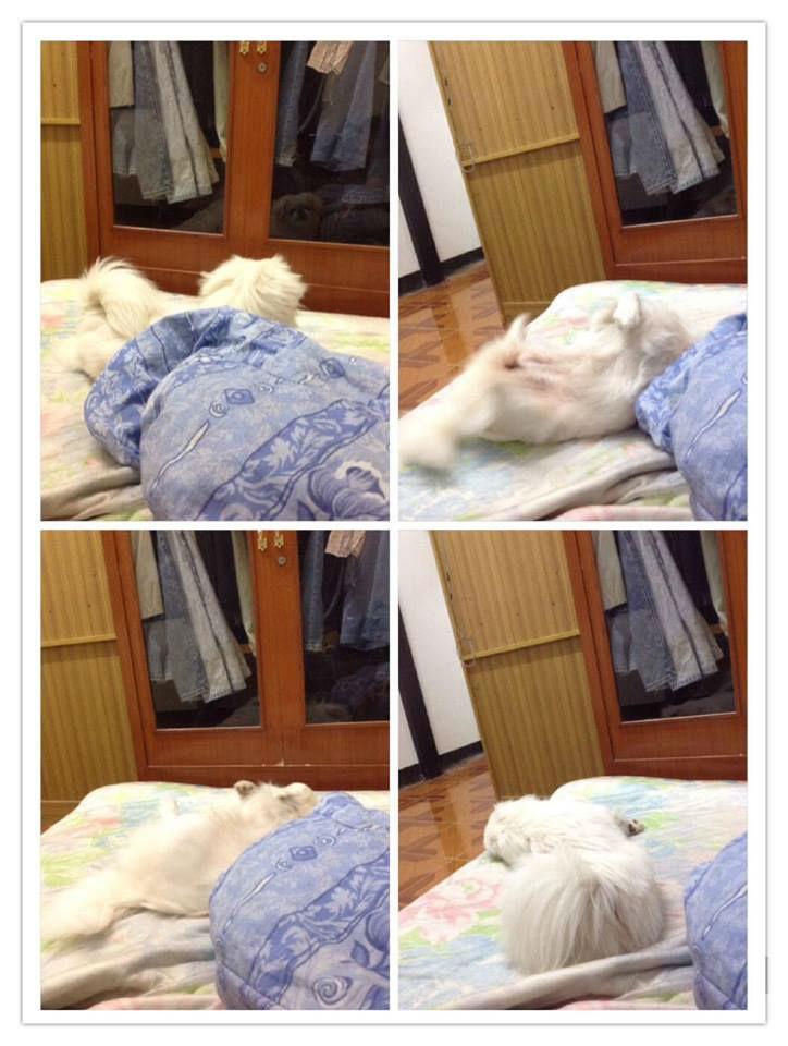 เมื่อปาป๊าของนางไม่อยู่ นางเรยมีสิทธิ์มานอนดิ้นกะแด่ว กะแด่ว อยู่บนที่นอน