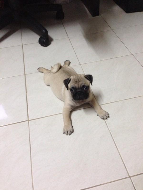 เล่นจนเหนื่อยแล้ว