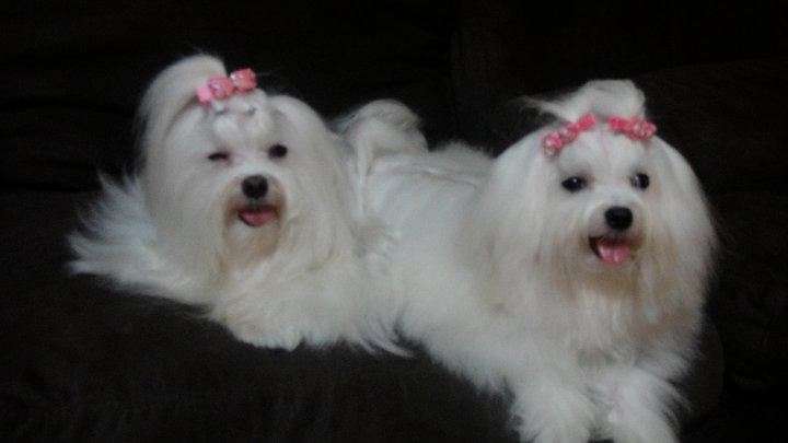 Kouper(ซ้าย)  Kara (ขวา)