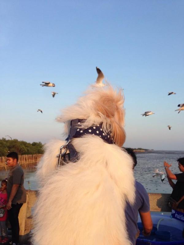 นู๋เป็นหมาที่ชอบชมนกแบบสูงๆ