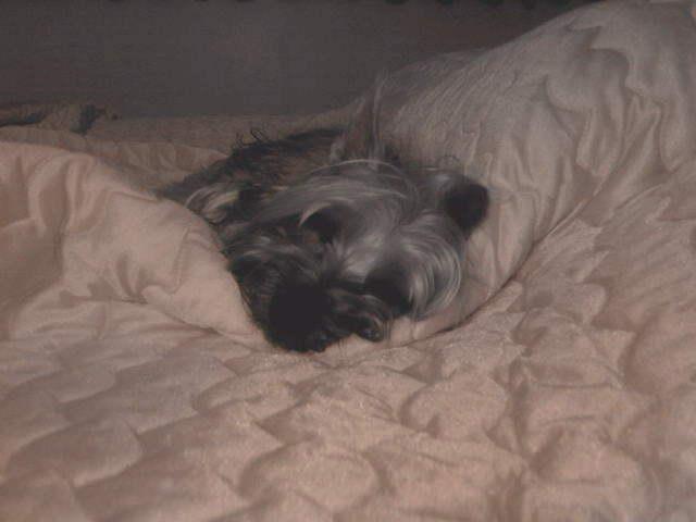 ปุงปุงง่วงนอนแล้วครับ
