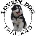 LOVELYDOG THAILAND