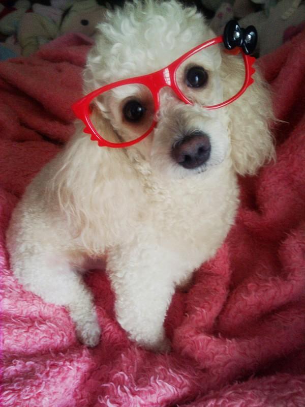 แว่นใครหว๋า