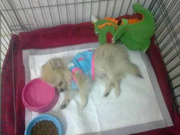 หนุนชามนอนเนี้ยแหระ (นู๋เพิ่งโดนรถชนมา ตอนอายุ 4 เดือน)