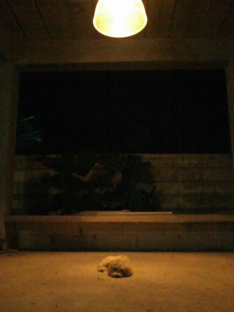 อันนี้มุมโปรดของเดรโก้มัน..เหมือนนอนกลางแสงจันทราสาดส่อง - -