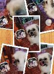 Chucky with Cesar