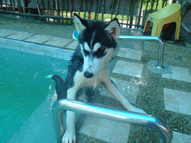 หนูว่ายน้ำเล่น