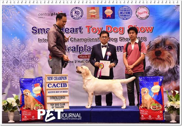 Thailand dog show