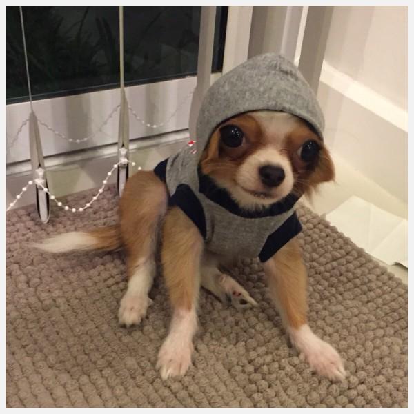 Dog Hip Hop