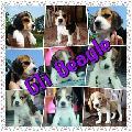 GTi Beagle