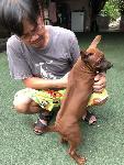 ขายลูกสุนัขไทยหลังอาน