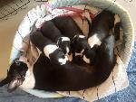 Mojo Maya and the pups