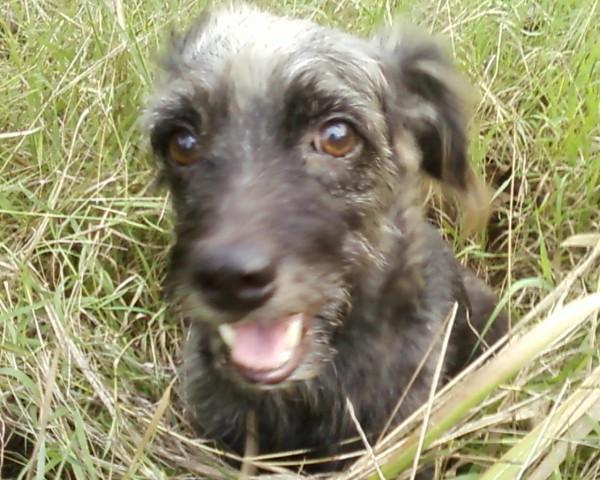 ภาพนี้ถ่ายตอนเจ้านิลไปวิ่งเล่นอยู่ในโพรงหญ้า น่ารักเชียว เค้าดูมีความสุขมากเลยนะตอนนั้น ^_^