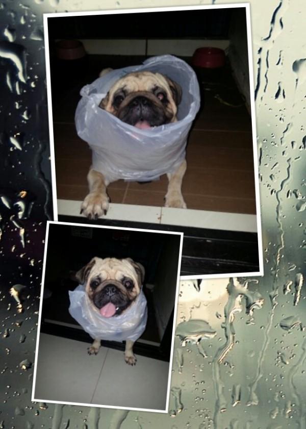 ช่วงนี้ในตกบ่อย อย่าลืมใส่เสื้อกันฝนนะค๊าบ