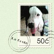 รูปของ i3etterdogs