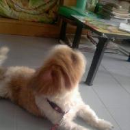 รูปของ panpann