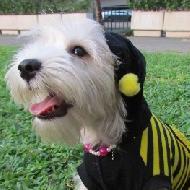รูปของ Namnue Dog shop