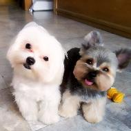 รูปของ dogcloset